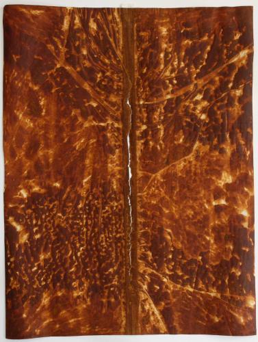 Split. 2010. Iron oxide on vellum. 23½ x 18