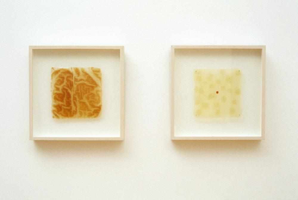 Severance, Particles 1. 2005. Artists blood, resin. 12 x 12""