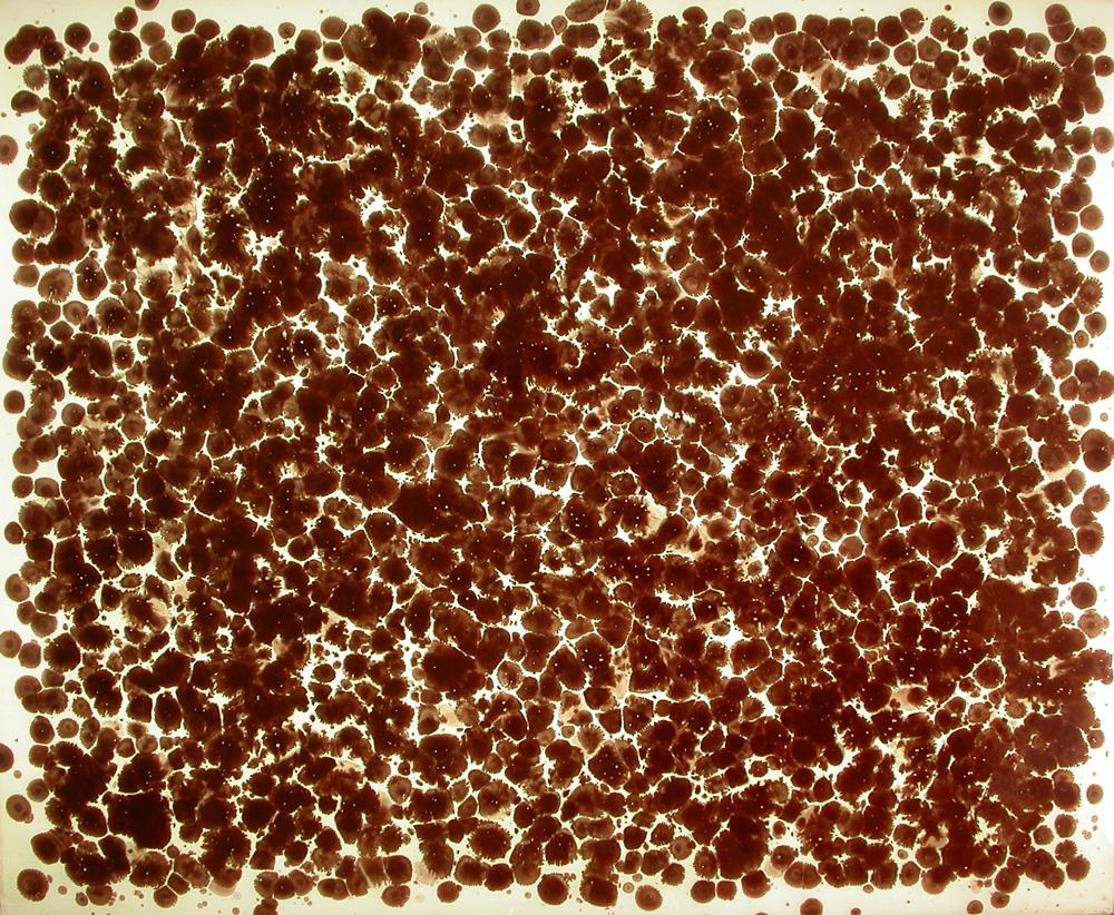 "Particles (Rose) 2006. Artists blood, resin. 29 x 35 x 3"". Darrin Hallowell"